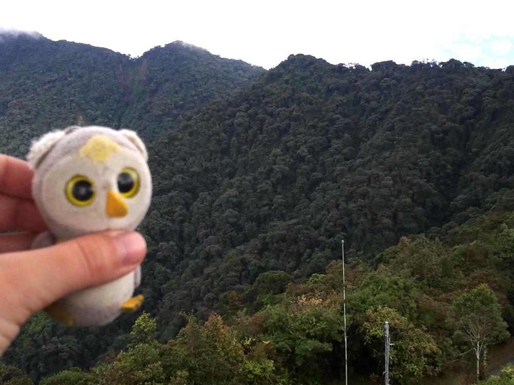 ... die auch mal im Wald waren (Cameron Highlands, Malaysia)...