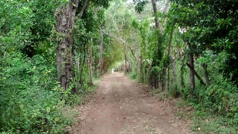 Unterwegs zum Baumhaus