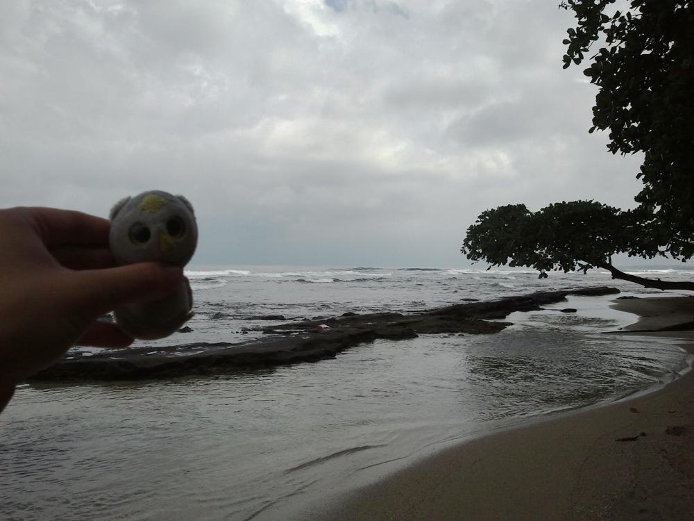 ...an nicht ganz so sonnigen Tagen (Puerto Viejo, Costa RIca)...
